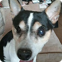 Adopt A Pet :: Sparrow - Goodyear, AZ