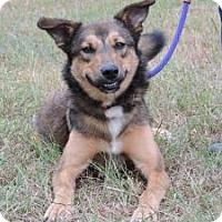 Adopt A Pet :: Max - Berkeley Heights, NJ