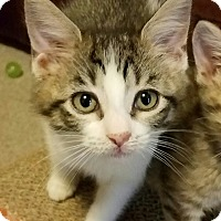 Adopt A Pet :: Merida - Jeannette, PA