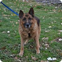 Adopt A Pet :: Bo - Akron, OH