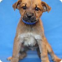Adopt A Pet :: Bronx ADOPTION PENDING - Waldorf, MD