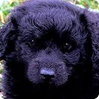 Adopt A Pet :: LORADO(OUR