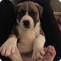 Adopt A Pet :: Nakita - Los Banos, CA
