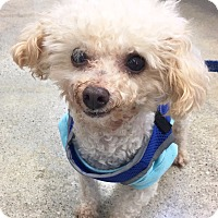Adopt A Pet :: Kiwi - Los Angeles, CA