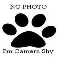 Adopt A Pet :: A501602 - San Bernardino, CA