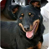 Adopt A Pet :: Sage - Canoga Park, CA