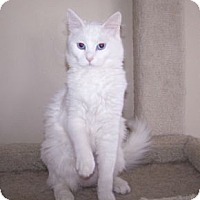 Adopt A Pet :: K-MaryG1-Natasha - Colorado Springs, CO
