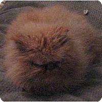 Adopt A Pet :: Ol' Red - Davis, CA