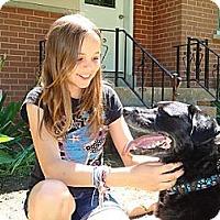 Adopt A Pet :: Bruno - Hamilton, ON