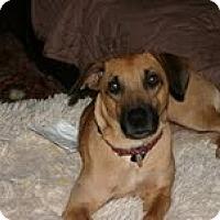 Adopt A Pet :: Frankie - Marietta, GA