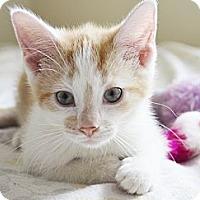 Adopt A Pet :: Bonita - Xenia, OH
