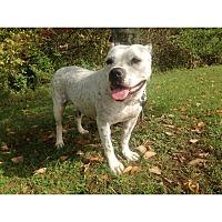 Adopt A Pet :: Nova - Hollywood, FL