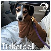 Adopt A Pet :: Tinkerbell - Novi, MI