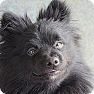 Adopt A Pet :: Wolverine