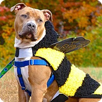 Adopt A Pet :: Beatriz - Reisterstown, MD
