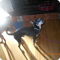 Adopt A Pet :: Chihua - Wellington, OH