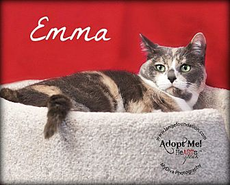 Calico Cat for adoption in Canyon Country, California - Emma