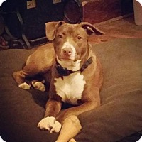 Adopt A Pet :: Halley Sue - Dayton, OH