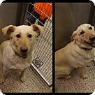Adopt A Pet :: Butter