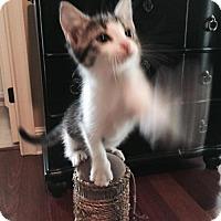Adopt A Pet :: Guinness - Orlando, FL