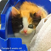 Adopt A Pet :: Fuzzy - Marlton, NJ
