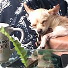 Adopt A Pet :: Langley