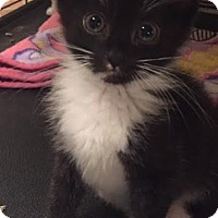 Adopt A Pet :: Leo - Ortonville, MI