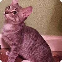Adopt A Pet :: Bailey (baby) - Houston, TX