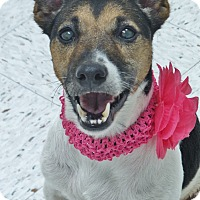 Adopt A Pet :: Missy - Chambersburg, PA
