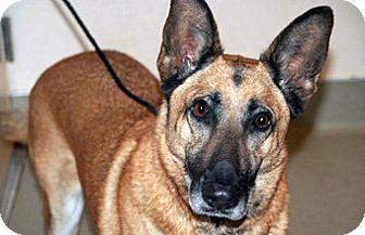 German Shepherd Dog Mix Dog for adoption in Wildomar, California - Eos