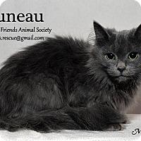 Domestic Longhair Cat for adoption in Ortonville, Michigan - Juneau