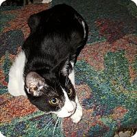 Adopt A Pet :: Kylo - Smithfield, NC