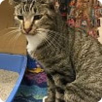Adopt A Pet :: Sprague - Manchester, CT