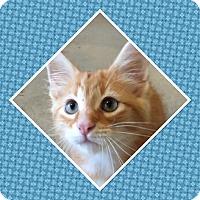Adopt A Pet :: Cinder - Cedar Springs, MI