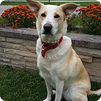 Adopt A Pet :: Dixie - Wapakoneta, OH
