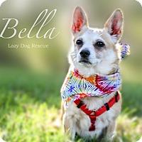 Adopt A Pet :: Bella - Valley Center, CA