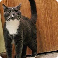Adopt A Pet :: Cobalt - West Des Moines, IA