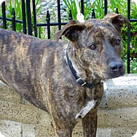 Adopt A Pet :: Mo - Anaheim, CA