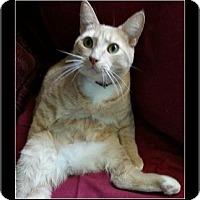 Adopt A Pet :: Harley - Waldorf, MD
