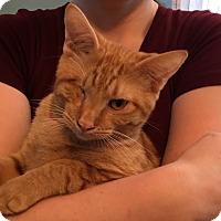 Adopt A Pet :: Spice - Tehachapi, CA
