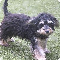 Adopt A Pet :: Hewitt - Norwalk, CT