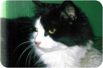 Domestic Longhair Cat for adoption in Medway, Massachusetts - Jessica
