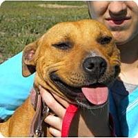 Staffordshire Bull Terrier Dog for adoption in New Roads, Louisiana - Bella