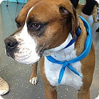 Adopt A Pet :: Roscoe - Homewood, AL