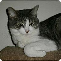 Adopt A Pet :: Cora - Brea, CA