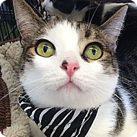 Adopt A Pet :: Marbles - Winchester, CA