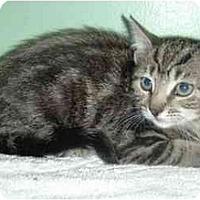 Adopt A Pet :: Mac - New Egypt, NJ