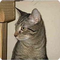 Adopt A Pet :: Tazzie - Deerfield Beach, FL
