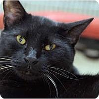 Adopt A Pet :: Coal - Scottsdale, AZ