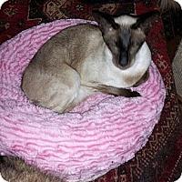 Adopt A Pet :: Emma - Columbus, OH